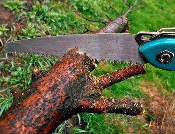Администрация города вывесила новый график опиловки деревьев