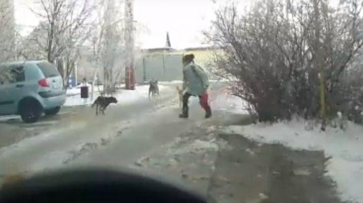 В Ахтубинске момент нападения собак на ребенка попал на видеокамеру