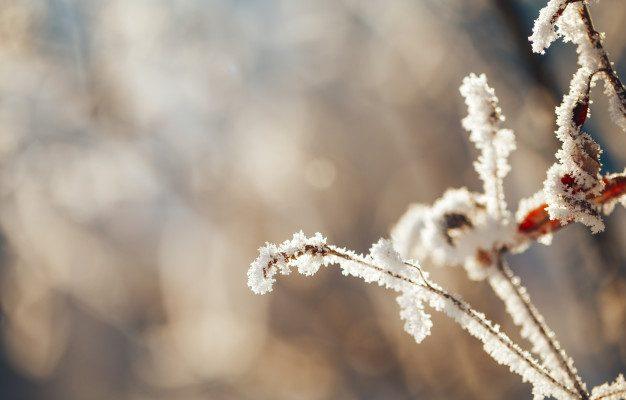 В Астрахани ожидаются заморозки