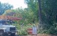 В Астрахани снова взялись за уничтожение деревьев