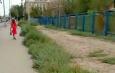 Вдоль дороги на улице Яблочкова выращивают сорняки вместо деревьев
