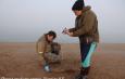 нашли погибших тюленей