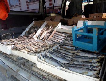 Астрахань незаконная торговля рыбой