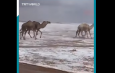 В пустыне Сахара впервые за 40 лет выпалснег