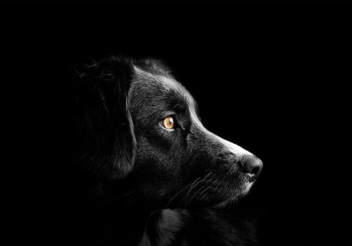 отлов чипированных собак