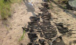 В Астраханской области нашли скелет древнего бизона