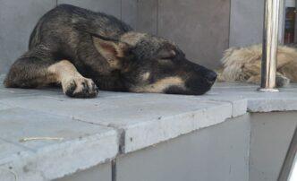 отлов собак астрахань