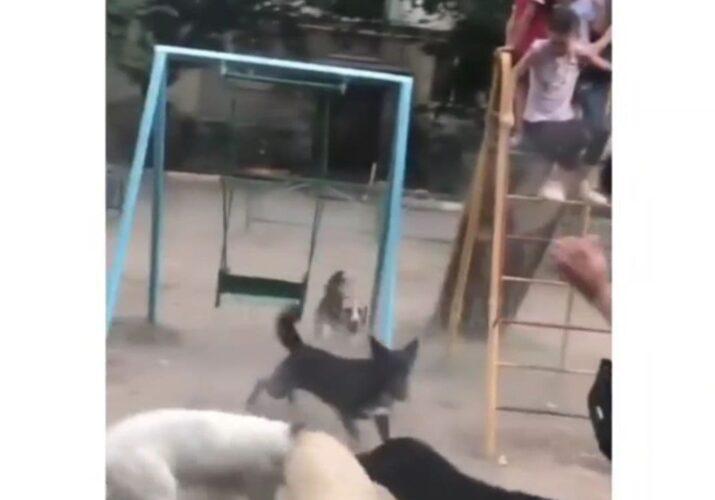 бродячие собаки на детской площадке