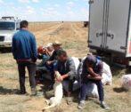 Астраханские полицейские выявили более 600 нелегальных мигрантов