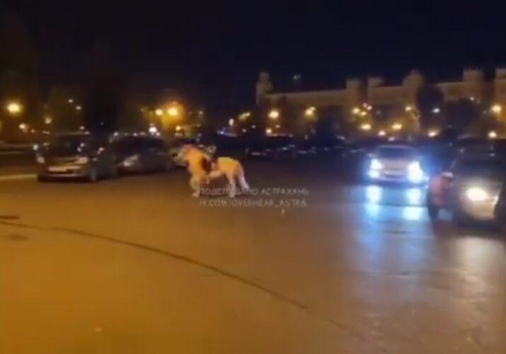 авария с пони