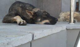 бродячие собаки астрахань
