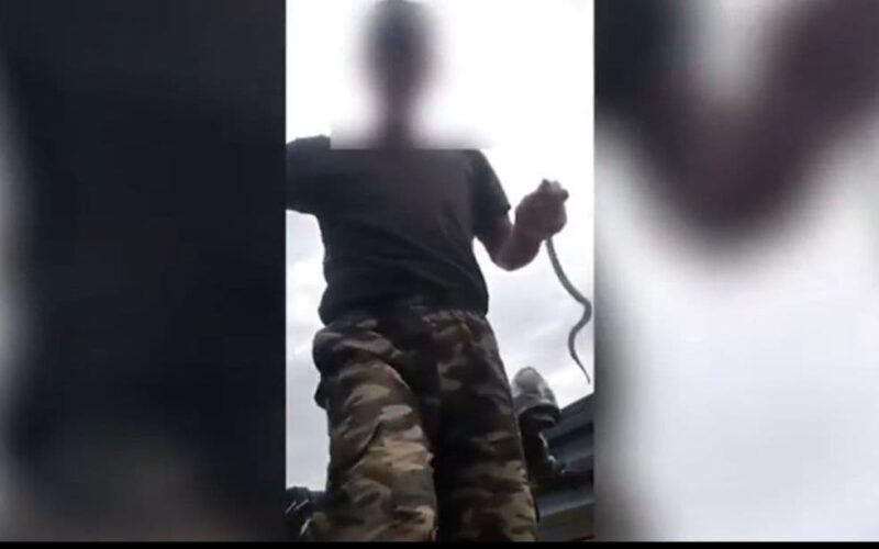 астраханец умер после фокуса со змеей