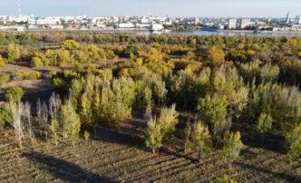 Нужен ли парк вАстрахани на острове Городской?